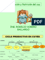 165564554 Alimentacion Cuyes Clases