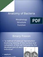 AnatomyofBacteria_002