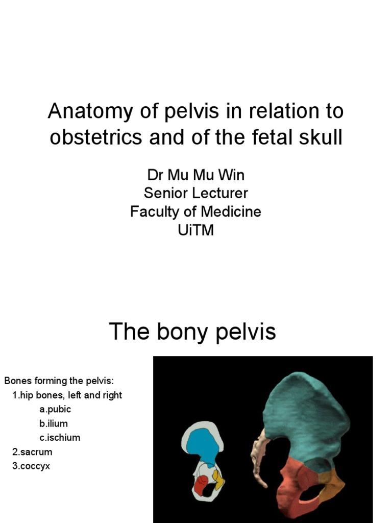 070710 Anatomy Of Pelvis And Fetal Skull Pelvis Human Anatomy