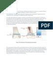Physeal Anatomy