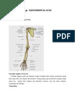 Anatomi Fisiologi SUPERIOR AII