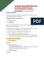 Reconocimiento de Enfermedades Horticolas en Lambayeque-Perú