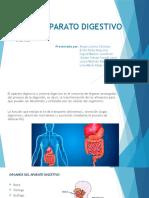 Aparato Digestivo ( Micro)