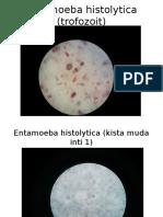Parasitologi Slide GEH