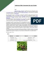acidos vegetales