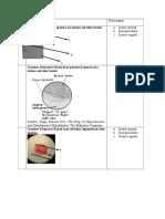 Hasil Pengamatan Embrio Katak