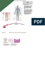 General Surgery Notes - Vascular Surgery