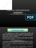 Cosecha y Postcosecha en Mandarina