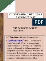 2. Colinearidad Del Gen y Las Proteinas