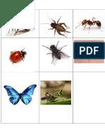 Insectos - Copia