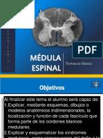 07_Médula_espinal_SUSTANCIA_BLANCA