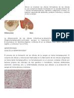 Órganos hematopoyéticos