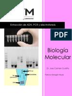 PCR Molecular