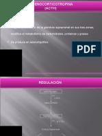 B-zuli Adrenocoticotropina (1) (1)