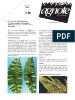 blight-disease-mango.pdf
