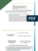 16.Fisiologia Vegetal AUXINAS