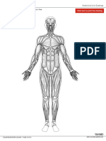 muscle_wo_labels_anterior.pdf