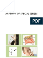 LAB SENSES edited 5.pdf