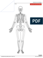 Skeletal Wo Labels Anterior
