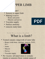 upper limb ppt.ppt