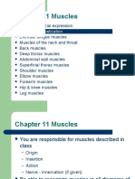 11Muscles.ppt