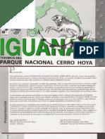 Iguanas -Tesoro Del Parque Nacional Cerro Hoya