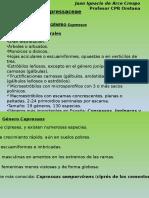 Identificación Coníferas II