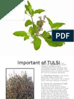 Importance of Tulsi