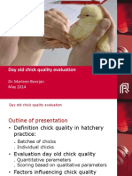 Day Old Chick Quality Evaluation-PAS Reforms