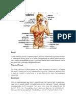 digestiv syst
