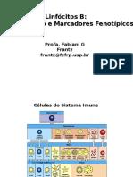 Diversidade dos Anticorpos Imunologia Basica