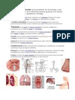 pulmones.docx