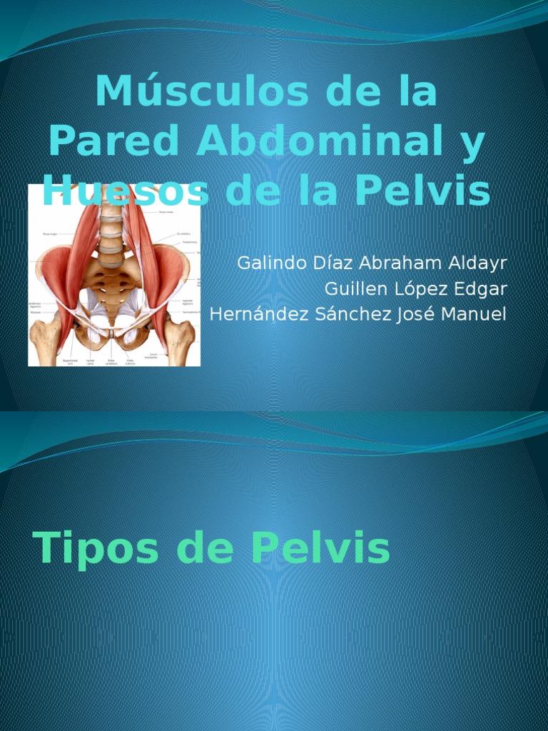 Músculos de La Pared Abdominal y Huesos De La Pelvis