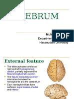 Cerebrum