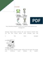 Tipe Mulut Serangga Entimologi
