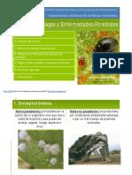 Ud6 Plagas y Enfermedades Forestales