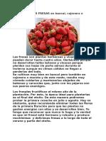 Como Cultivar Fresas en Bancal