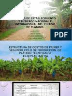 Costos de Establecimiento Y Mercado Nacional e Internacional en cultivo de plátano
