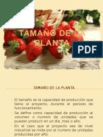2.-Tamaño de La Planta Mermelada Dietetica de Frutilla