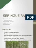 SERINGUEIRA.pptx