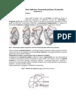 6. Prezentatiile Craniene Deflectate. Prezentatia Pelviana. Prezentatia Transversa