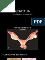 Genitalia 2016
