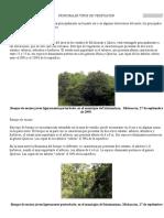 PRINCIPALES TIPOS DE VEGETACIÓN.docx
