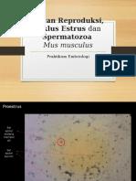 Siklus Estrus Dan Spermatozoa