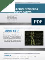 Hibridacion Genomica Comparativa