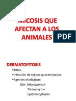 micosis  en animales.pdf