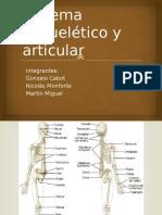 Sistema Esquelético y Articular (Basico)