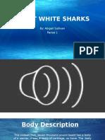 Sullivan Great White Sharks