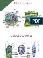 2b.estructura Celular Microbiana