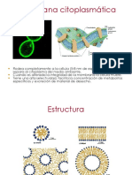 2c.membrana Citoplasmatica BRV2